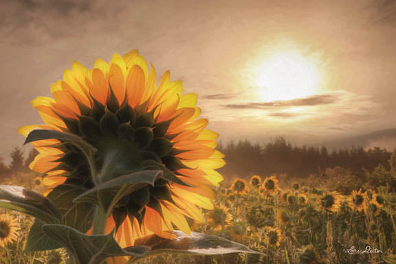 Lori Deiter LD1085 - Sunlit Sunflower - Sunflower, Field, Sun from Penny Lane Publishing