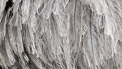 LD1165 - Silver Feathers - 18x9