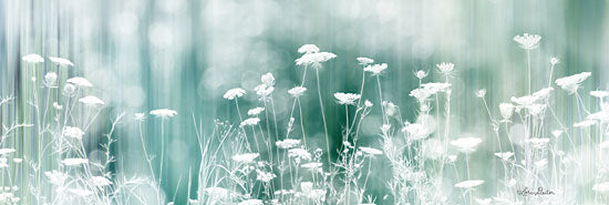 Lori Deiter LD1566 - Dreamy Meadow - 24x8 Meadow, Filter, Wildflowers, Queen Ann's Lace from Penny Lane
