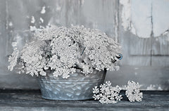 LD1997 - Queen Anne's Lace I    - 18x12