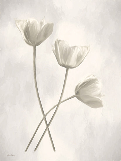 Lori Deiter LD2213 - LD2213 - Bleached Tulips III - 12x16 Tulips, Flowers, Botanical, Photography from Penny Lane