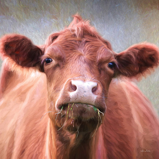 Lori Deiter LD2276 - LD2276 - The Brown Cow - 12x12 Cow, Portrait, Photography  from Penny Lane