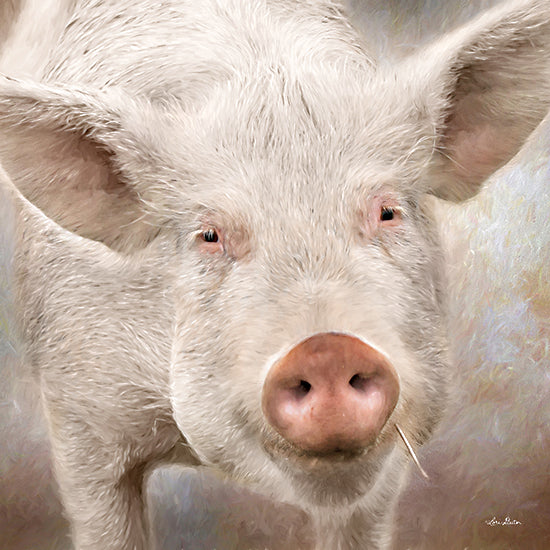 Lori Deiter LD2282 - LD2282 - Pig Face - 12x12 Pig, Farm, Portrait, Photography from Penny Lane