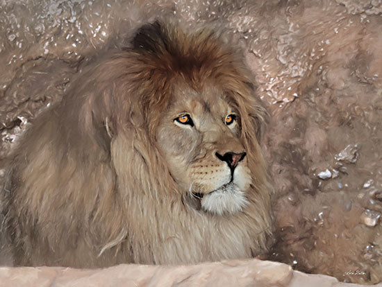 Lori Deiter LD2401 - LD2401 - Leo the Lion - 16x12 Lion, Portrait, Photography, Wildlife from Penny Lane