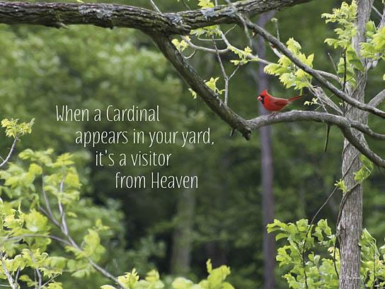 Lori Deiter LD715B - Visitor from Heaven - Cardinal, Trees, Heaven, Encouraging from Penny Lane Publishing