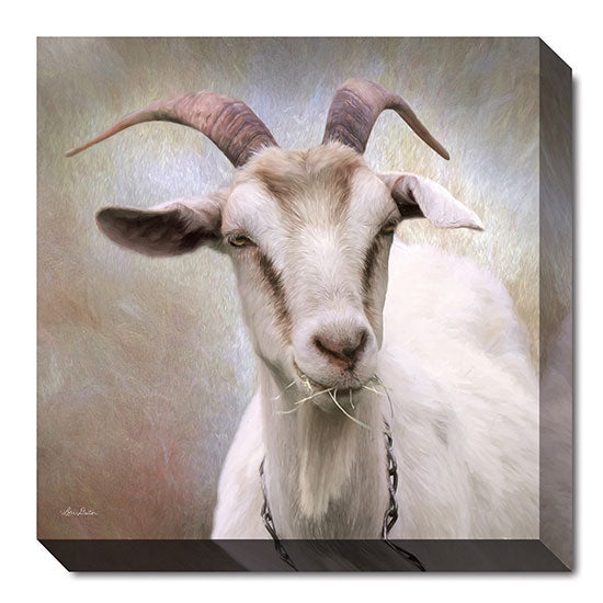 Lori Deiter LD878A - Up Close Goat - Goat, Animals, Photography, Farm Life from Penny Lane Publishing