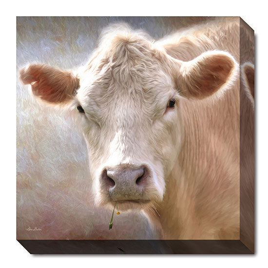 Lori Deiter LD879A - Up Close Cow - Cow, Animals, Photography, Farm Life from Penny Lane Publishing