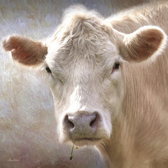 LD879A - Up Close Cow - 12x12