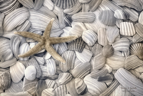 Lori Deiter LD924 - Starfish & Seashells - Shells, Starfish, Nature, Coastal, Photography from Penny Lane Publishing