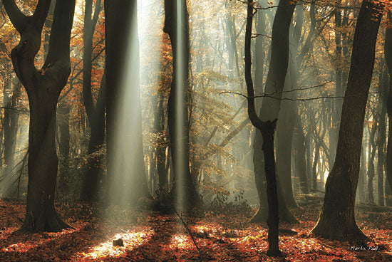 Martin Podt MPP140 - Beam Me Up - Sun Beams, Trees, Forest from Penny Lane Publishing