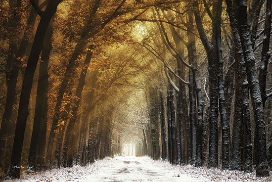 Martin Podt MPP154 - Autumn to Winter - Trees, Snow, Forest, Sun from Penny Lane Publishing