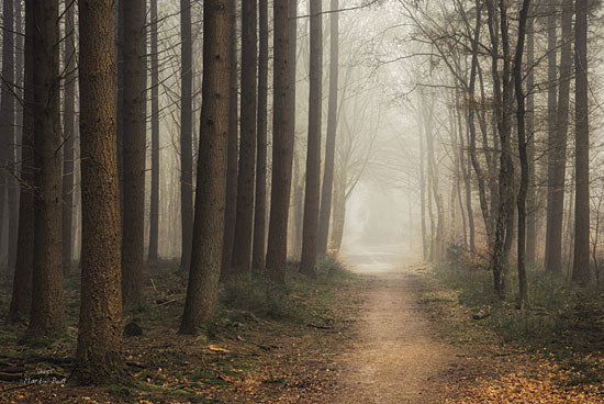Martin Podt MPP175 - Quiet - Path, Trees, Forest, Landscape from Penny Lane Publishing