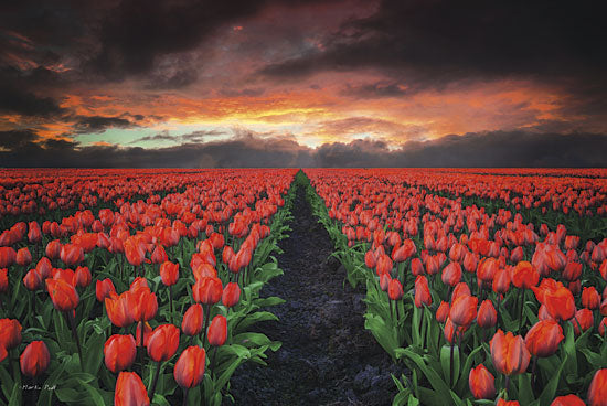 Martin Podt MPP182 - Endless Fields - Tulips, Field, Landscape, Paths from Penny Lane Publishing