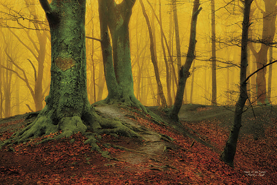 Martin Podt MPP197 - Heart of the Forest - Trees, Roots, Leaves, Sun, Landscape from Penny Lane Publishing