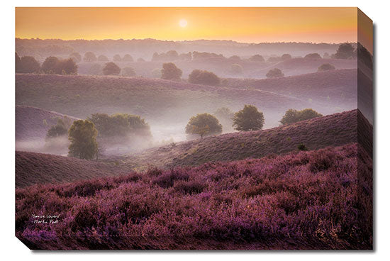 Martin Podt MPP221 - Sunrise Layers - Tree, Hills, Sun, Landscape, Nature, Photography, Trees, Path from Penny Lane Publishing