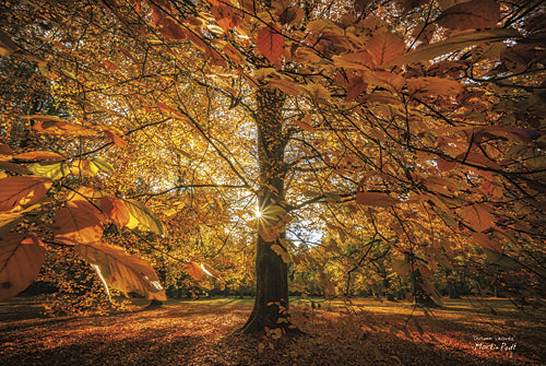 Martin Podt MPP263 - Autumn Leaves - Tree, Autumn, Landscape, Nature, Photography, Trees, Path, Fall from Penny Lane Publishing