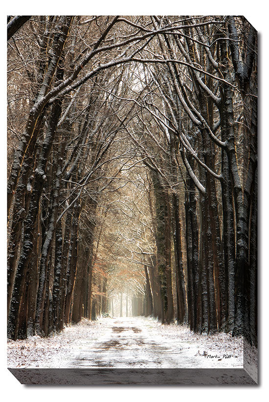 Martin Podt MPP268 - Winter - Tree, Snow, Trees, Path, Landscape, Nature, Photography, Trees, Winter from Penny Lane Publishing