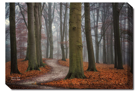 Martin Podt MPP273 - Autumn Path - Tree, Path, Trees, Landscape, Nature, Photography from Penny Lane Publishing