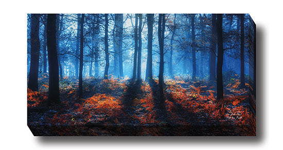 Martin Podt MPP276 - Out of the Blue - Tree, Path, Trees, Landscape, Nature, Photography from Penny Lane Publishing