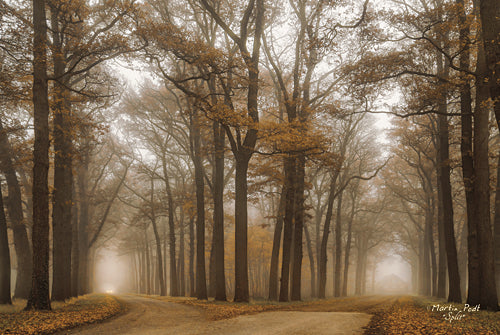 Martin Podt MPP282 - Split - Trees, Landscape from Penny Lane Publishing
