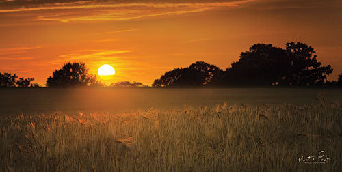 Martin Podt MPP333 - Fields of Gold - Fields, Landscape, Sun, Trees from Penny Lane Publishing