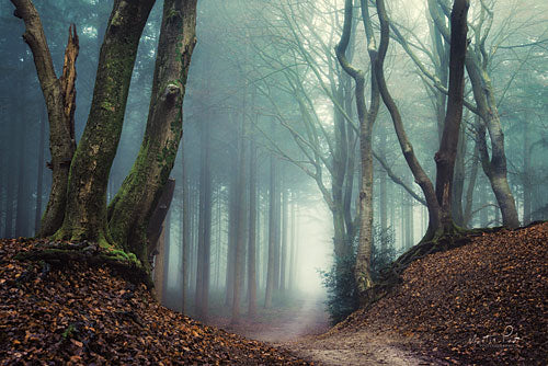 Martin Podt MPP334 - Serpents - Trees, Path, Forest, Fog from Penny Lane Publishing
