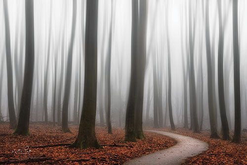 Martin Podt MPP336 - Faded - Trees, Path, Forest, Fog from Penny Lane Publishing