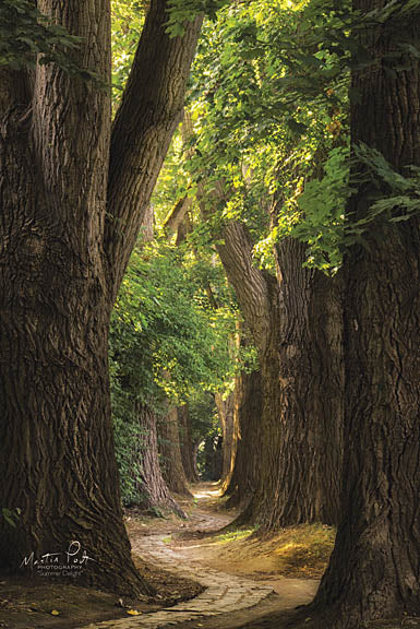 Martin Podt MPP339 - Summer Delight - Trees, Path, Forest from Penny Lane Publishing