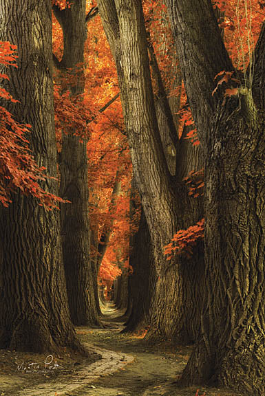 Martin Podt MPP340 - I'll Find My Way - Trees, Path, Forest, Autumn from Penny Lane Publishing