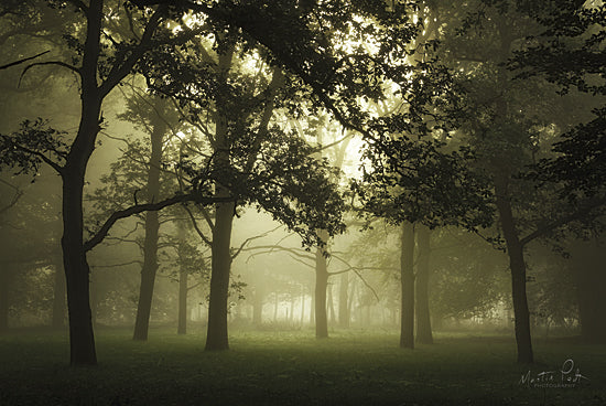 Martin Podt MPP345 - Autumn is Approaching - Autumn, Trees, Foggy from Penny Lane Publishing