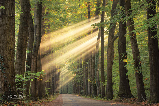Martin Podt MPP477 - MPP477 - Rayzor Light    - 18x12 Photography, Sun Rays, Paths, Trees, Forest from Penny Lane