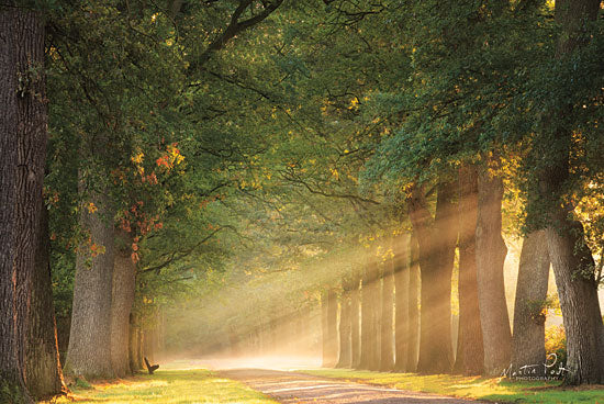 Martin Podt MPP478 - MPP478 - Perfect Place to Sit    - 18x12 Photography, Sun Rays, Paths, Trees, Forest, Bird from Penny Lane