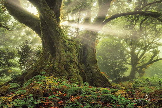 Martin Podt MPP479 - MPP479 - One-Two Tree   - 18x12 Photography, Sun Rays, Trees, Forest from Penny Lane