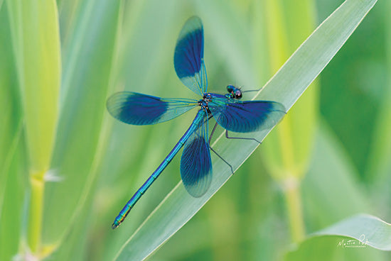 MPP594 - Damselfly in Blue - 18x12