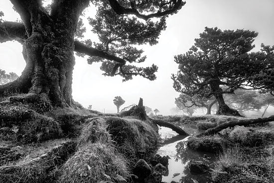 Martin Podt MPP609 - MPP609 - Black & White Fanal - 18x12 Photography, Black & White, Trees, Landscape, Creek from Penny Lane