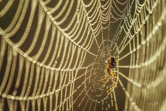 Martin Podt MPP629 - MPP629 - The Spider and Her Jewels - 18x12 Photography, Spider, Web, Water from Penny Lane