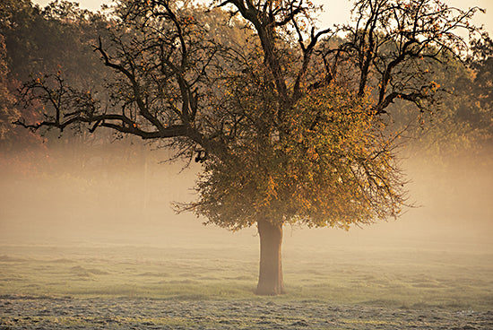 Martin Podt MPP633 - MPP633 - The Funny One - 18x12 Photography, Landscape, Trees, Fog, Sunrise from Penny Lane