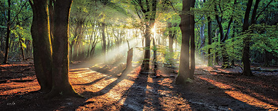 Martin Podt MPP686A - MPP686A - Sun Rays in the Forest I - 36x12 Trees, Forest, Sun Rays, Sunlight, Photography, Nature, Landscape from Penny Lane