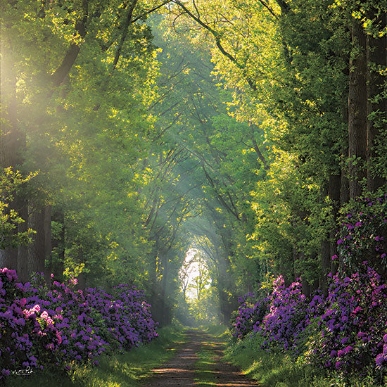 Martin Podt MPP689 - MPP689 - Morning in the Forest - 12x12 Trees, Forest, Sunlight, Photography, Flowers, Purple Flowers from Penny Lane