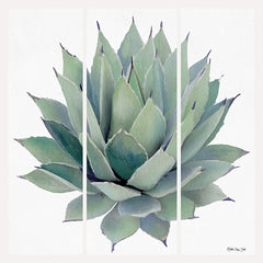 SDS236 - Agave Triptych 2 - 12x12