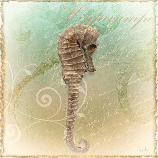 Sophie 6 SIX156 - SIX156 - The Sea III - 12x12 Seahorse, Marine Fish, Color Bakery, Aquatic Animal, Coastal from Penny Lane
