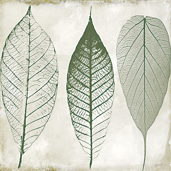 Sophie 6 SIX511 - SIX511 - Columbian Forest II - 12x12 Leaves, Abstract, Green & Cream, Color Bakery from Penny Lane