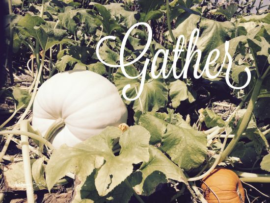 Anthony Smith ANT138 - Gather Gather, White Pumpkins, Harvest, Pumpkin Patch, Farm from Penny Lane