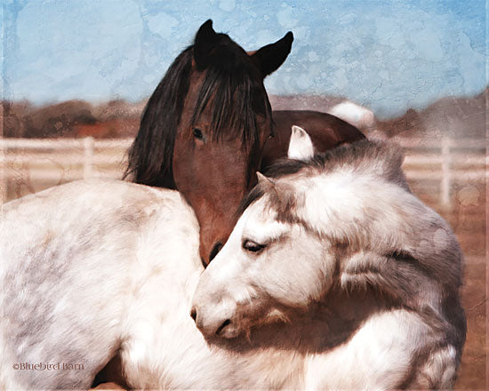 Bluebird Barn BLUE155 - BLUE155 - White and Chestnut Horses    - 16x12 Horses, Photography, Portrait, White Fence, Farm Life from Penny Lane