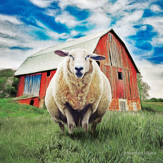 Bluebird Barn BLUE157 - BLUE157 - Sunday Afternoon Sheep Pose   - 12x12 Sheep, Red Barn, Country, Farm Life, Portrait from Penny Lane