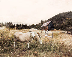 BLUE158 - Sheep in the Meadow    - 16x12