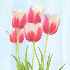 BLUE295 - Fresh Spring Tulips III - 12x12