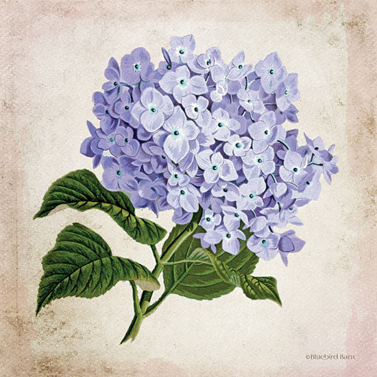 Bluebird Barn BLUE399 - BLUE399 - Vintage Lilac - 12x12 Lilacs, Flowers, Botanical, Florals from Penny Lane