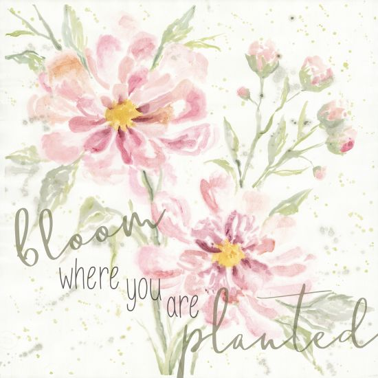 Cindy Jacobs CIN1389 - Bloom Where You are Planted Bloom Where You are Planted, Flowers, Botanical, Calligraphy, Signs from Penny Lane