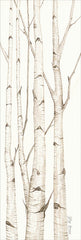 CIN901 - Birch Trees I